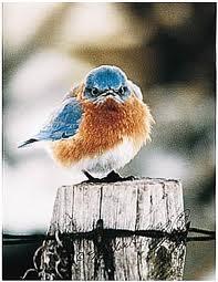 Badass bird.